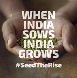 seed-rise-bottom2